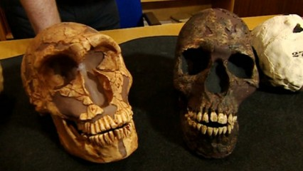 The Neanderthal skull (L) has larger eye sockets compared with a modern human skull (R). Consequently, the now extinct species used more of its brain to process visual information. Photo: BBC Online