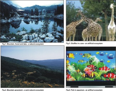 Difference Between Ecology And Natural Resource