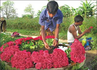 Flowers that pay off the daily star - Small farming ideas that pay off ...