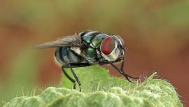 fly public health surveillance