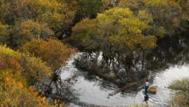 mangrove-forest-in-Vietnam