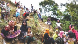 Rohingyas damage forest