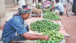Mango growers fear loss of production