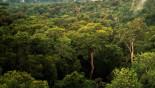 Ecuador to sell part of Amazon rainforest to oil companies