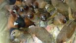 Over 4,000 birds rescued in Bagerhat
