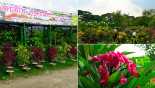 Demand for plants high at Brikkho Mela