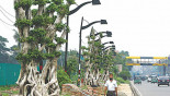 Potemkin Road: The tale of the strange bonsai beautification