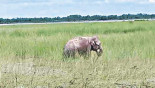 India to bring back washed away elephant