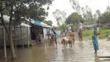 Flood: 4 die in Kurigram, Sirajganj
