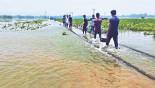 Fresh areas inundated