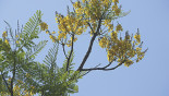 Nature Quest: The firetree