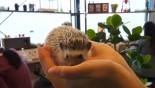 Japanese line up to cuddle hedgehogs - carefully