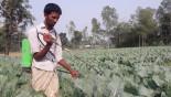 Indiscriminate use of pesticides on winter vegtables