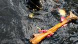 Mastodon meal scraps revise US prehistory