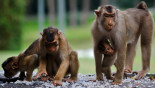 New AIDS drug shields monkeys: Study