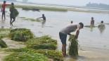Woman dies unable to bear crop damage in flood