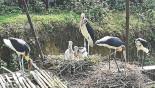 Madan Tak gives birth in captivity