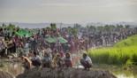 Myanmar army killed hundreds of Rohingyas: Amnesty