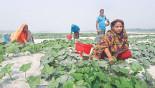 Landless farmers make sandy land green