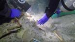 2,100-yr-old human skeleton found
