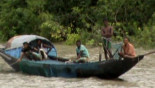 Death by poison: A constant threat for Sundarbans crustaceans and fish