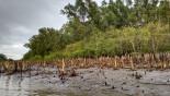 'Robber' killed in Sundarbans 'gunfight' with Rab