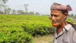 No Man's Land : Tea farming in Indian side
