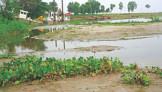 Silt in Teesta triggers flood