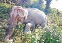 wild elephant found dead