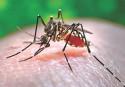 Chikungunya vs Dengue