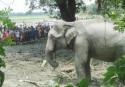 Death of elephant: Tk 1cr compensation sought