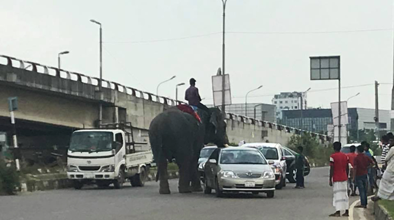 elephant-extortion-airport-road, elephant extortion, airport road