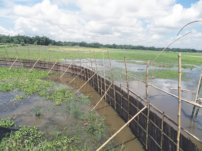 A bamboo fence erected by the BNP men, blocking the free flow of water to the nearby croplands. Photo: Star