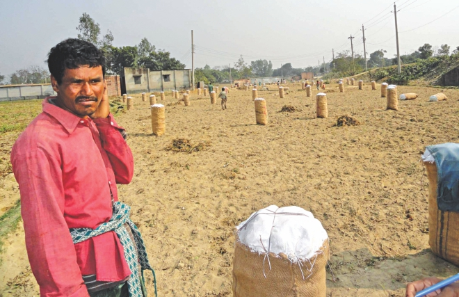 Abdul Hakim, a potato grower in Dinajpur, fears counting losses this time unlike the previous seasons due to continued political turmoil. Photo: Kongkon Karmakar