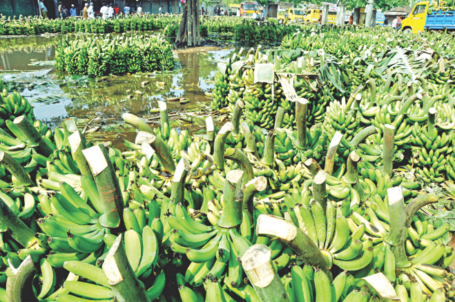 The consumer rights protection authority seized adulterated bananas and toxic chemicals at Kutubpur of Shakhipur in Tangail yesterday. However, such drives are few and far between and according to an FAO-sponsored test, 40 percent of food items in Bangladesh are adulterated and lack of monitoring is largely to blame for it. Photo: Star