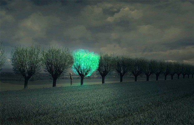 Bioluminescent trees could light up our streets