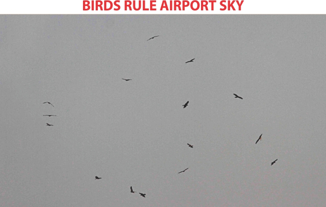 These birds flying over Hazrat Shahjalal International Airport might hit airliners, causing damage or accidents. Aircraft of Biman Bangladesh Airlines alone went through at least 15 bird strikes last year. The photo was taken recently.  Photo: Sk Enamul Haq