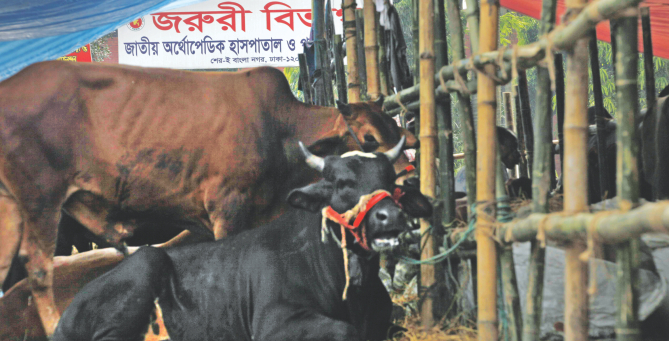 4 HOSPITALS cattle-trapped