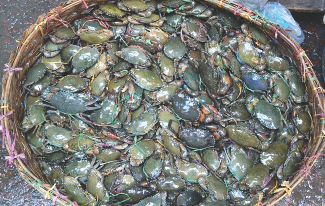 Crabs at a wholesale market in Kalapara upazila of Patuakhali.  Photo: Star