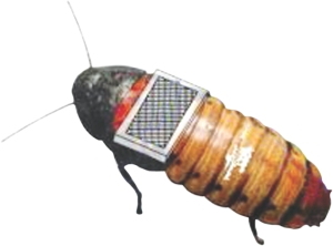 cyborg-cockroaches - Cyborg Cockroaches - Science and Research