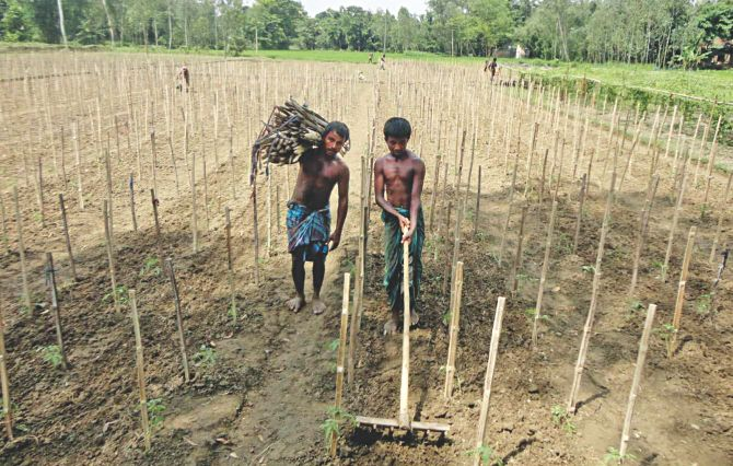 Farmers planting early winter vegetables to recoup losses