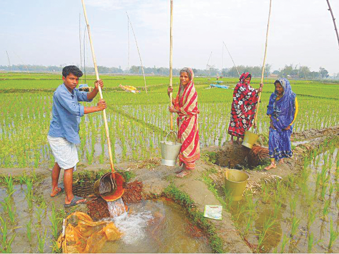 A marginal farmer's family lifts water with buckets from a makeshift well dug on their farmland for irrigating boro at Binnabari village in Jaldhaka upazila of Nilphamari district. Photo: Star