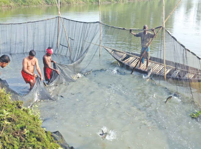 Farmers working together to catch fish using nets at Arial beel. PHOTO: Aditya Shaheen
