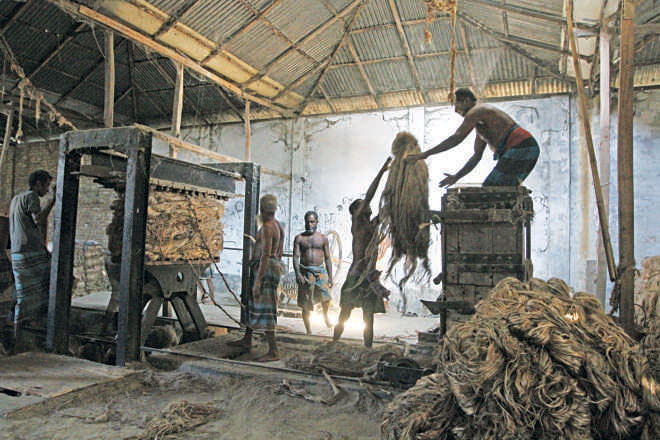 """Mandatory Packaging Act 2010"" can bring back the  golden days of jute. Photo: Prabir Das"