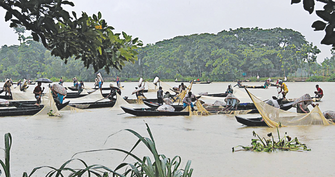 Boats of fishermen and egg collectors fill the Halda river, the country's lone natural spawning ground for freshwater carps. File Photo