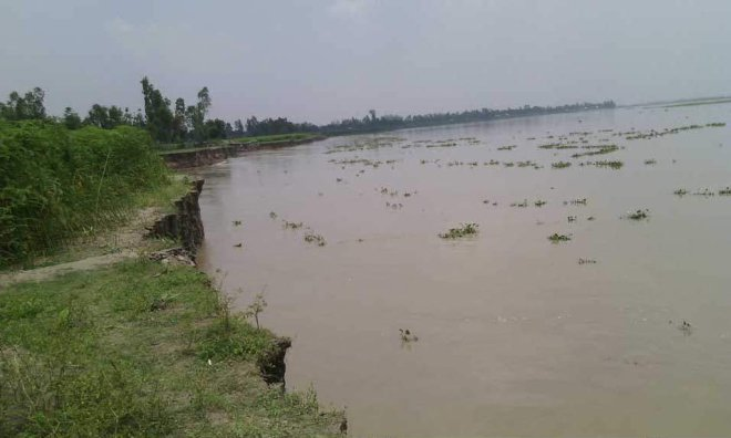 The Jamuna continues to engulf agricultural land in Shingria Bazar area in Phulchhari upazila of Gaibandha. Photo: Star