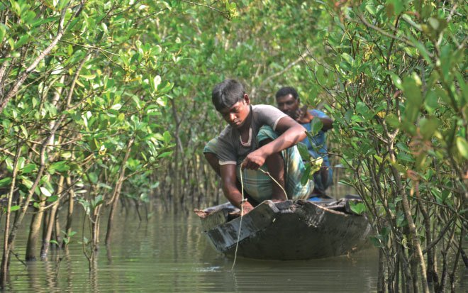 Like Natabar (back) and Haradhan, Sundarban provides livelihood for a large number of forest resource users. Photo: Enamul Mazid Khan Siddique