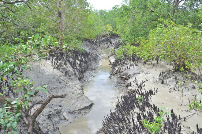 Creeks in the Sundarbans are essential for water supply and drainage of the clogged saline water. Photo: Enamul Mazid Khan Siddique