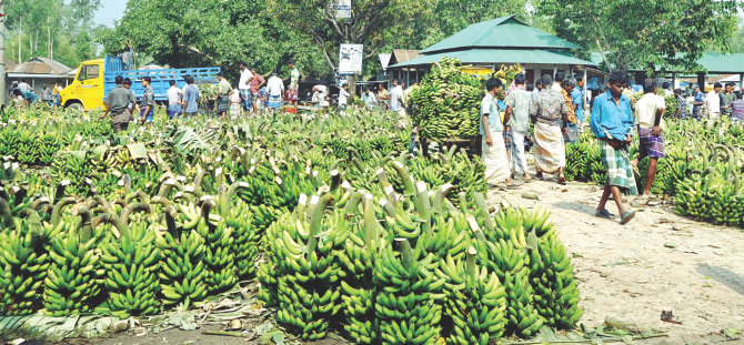 The department of consumer rights protection raids a wholesale banana market in Tangail in April and destroyed chemically tainted fruits. Photo: Banglar Chokh