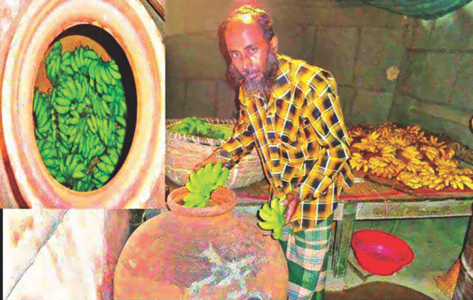 Chemically treated bananas are being heated up in an earthen pot in Bogra so that they ripe faster. Photo: File